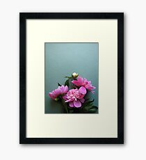pink peony blooms on green background Framed Print