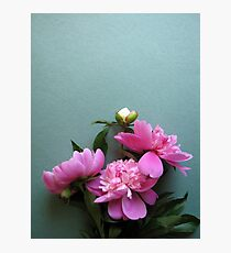 pink peony blooms on green background Photographic Print