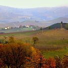 Vineyards in the Langhe by annalisa bianchetti