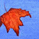 Fall Leaf against a Crystal Blue Sky by lisavonbiela