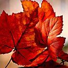 A Little Bit of Autumn  by autumnwind