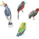 Borneo Birds Stickers 1/2 by LukeMartinsArt
