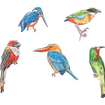 Borneo Birds Stickers 2/2 by LukeMartinsArt