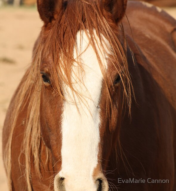 Wild Hair...Wild Horse... by EvaMarie Cannon