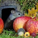 wild house mouse  in a apple by Simon-dell