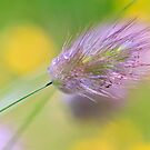 The Lightness of Being - Grasses in the Wind I by TomRaven