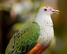Rose-Crowned Fruit Dove by Jason Asher
