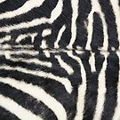 Zebra animal print by chihuahuashower