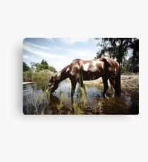 Inidan wild horse Canvas Print