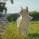 country kitten by sarahnewton