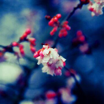 Summer Blossom by tdesigns