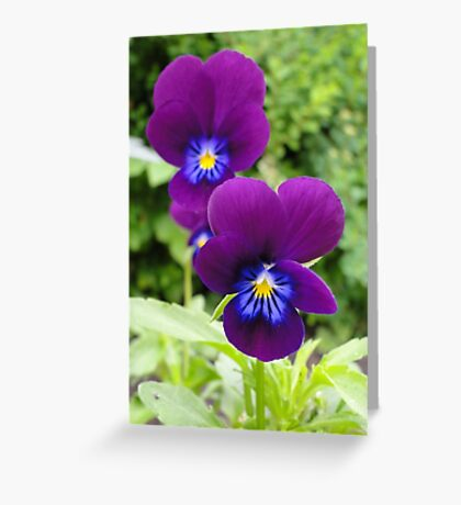 The Pansy Twins Greeting Card