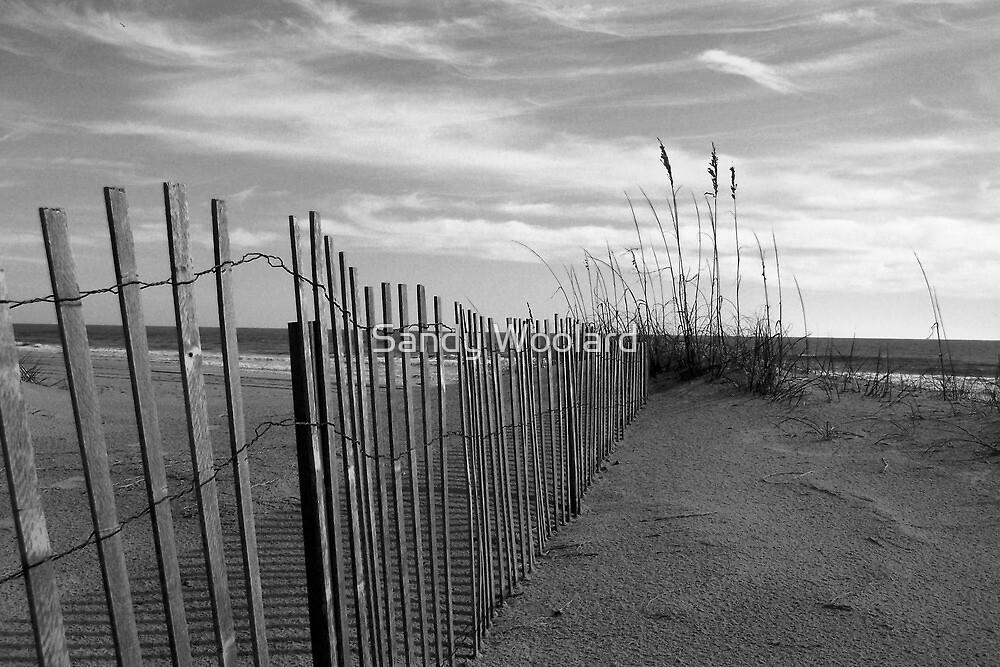 Quiet Walk by Sandy Woolard