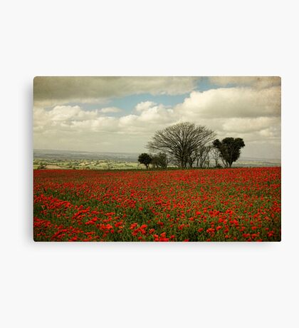 October Poppies Canvas Print
