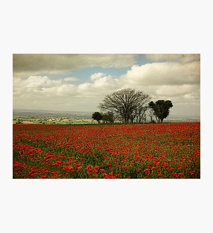October Poppies Photographic Print