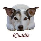Jack Russell iCuddle by Patricia Barmatz
