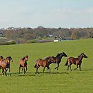 galloping horses by sarahnewton