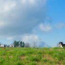 Walk the Amish Country by Bob  Perkoski