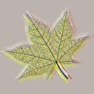 Spring Leaf by Van Nhan Ngo