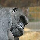 Gorilla by Karl R. Martin