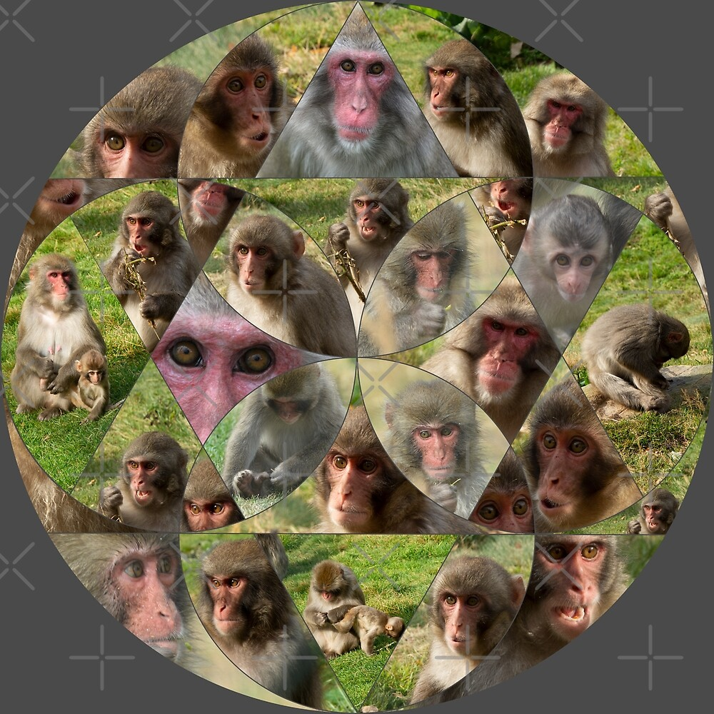 The Many Faces of Snow Monkeys by SiobhanFraser