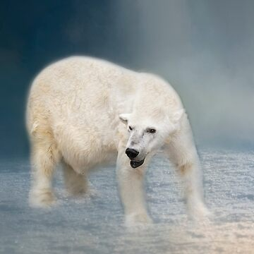 Polar Bear by kdxweaver