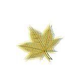 Spring Leaf #2 by Van Nhan Ngo