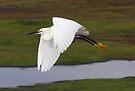 Snowy Egret by Michael  Moss