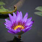 Neon Water Lilly by JenniferJW