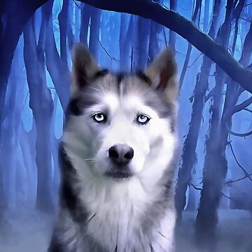 A Husky Dog. (Painting) by cmphotographs