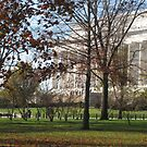 Lincoln Memorial in the Fall by Elspeth  McClanahan
