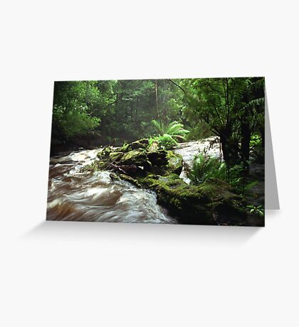 Below Russell Falls - Tasmania Greeting Card