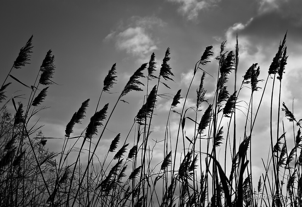 Through the Reeds by LeeAnne Emrick