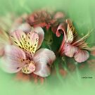 Delicate by Carolyn Staut