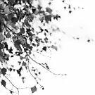 Mono Silver Birch  by Alyson Fennell