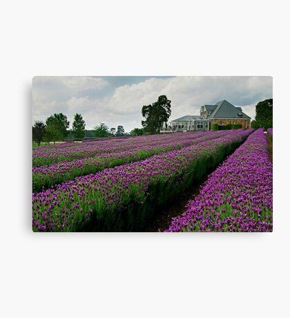 Lavender Farm Daylesford Victoria Canvas Print