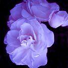 Pink Lovelies by Dawn B Davies-McIninch