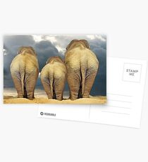 Traveling Elephant Family  Postcards