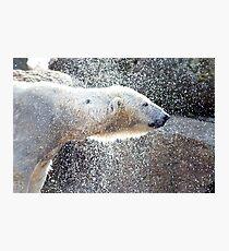 Polar bear1 Berlin zoo Photographic Print