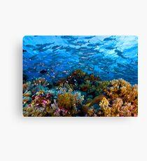 Coral Reef Leinwanddruck