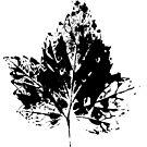 Schwarz weiß Natur Blatt von RanitasArt