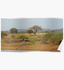 Hluhluwe Game Reserve, South Africa Poster