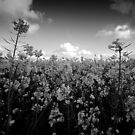 Black and white flowers by Mitch  McFarlane