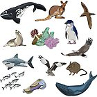 Animals of the Great Australian Bight by Alice Duigan Mussared