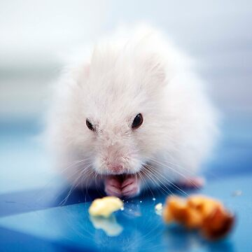 the little hamster by puspi