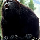Howler Monkey by Heather Haderly