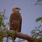 Tsavo East, Kenya - Crest by citrineblue