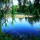 Paradise by laureenr