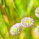 The Vibrance of Light - Grasses In The Wind III by TomRaven