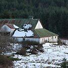 Mayne Island Historic Barn after first snow by TerrillWelch